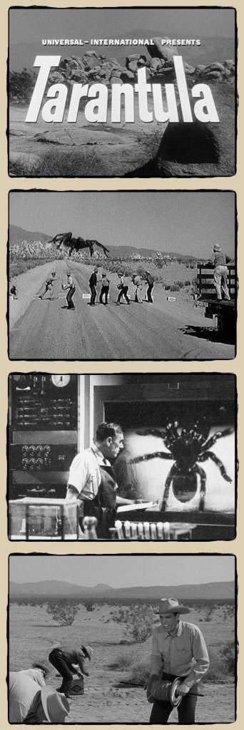 tarantula1955